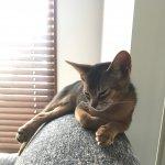 2匹の猫と暮らす家 – 袋井市方丈 Yさん家 –