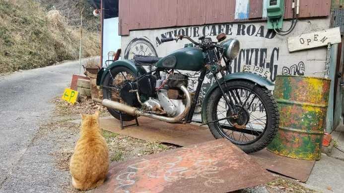 猫に会えるカフェ *掛川市・アンティークカフェロード*