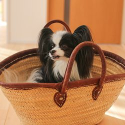 愛犬と暮らす平屋のお家 -掛川市中T様邸- お引渡し式