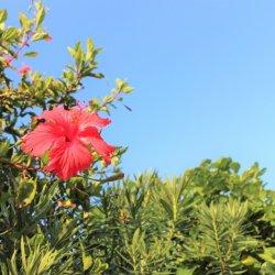 リフレッシュ休暇で竹富島へ♪